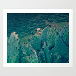 Cactus - Prickly Pear Flowers in a Green Valley Art Print