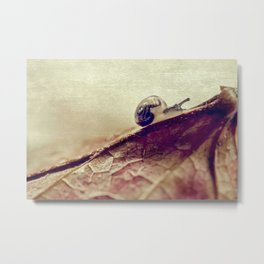little snail Metal Print