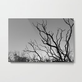 Tree in The Winter Metal Print