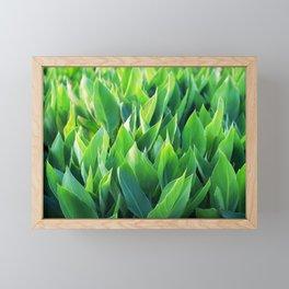 Green leaves so beautiful. Framed Mini Art Print