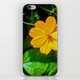 Large-flower Tickseed iPhone Skin