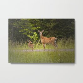 Doe and Fawn along a roadside near Iron Mountain Michigan Metal Print