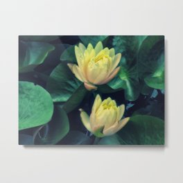 Yellow Lotus Flowers Metal Print