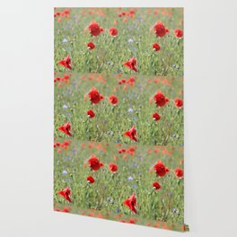 poppy flower no8 Wallpaper
