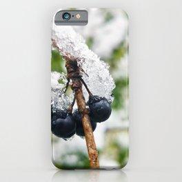Buckthorn Berries with Snow iPhone Case