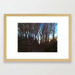 Fleeting Light Framed Art Print
