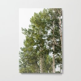 Minimal Forest Treescape II - Nature Photography Metal Print