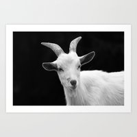 goat Art Prints featuring Goat by BACK to THE ROOTS
