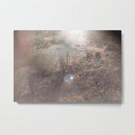 Joshua Tree Desert Floor Metal Print