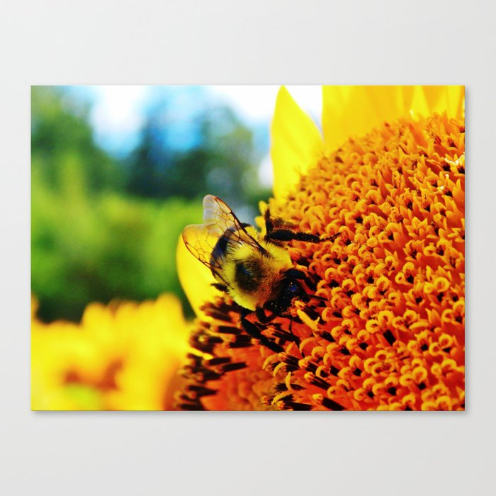 Feasting Bee Canvas Print