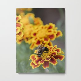 Bee collecting on Red and Yellow flowers Metal Print