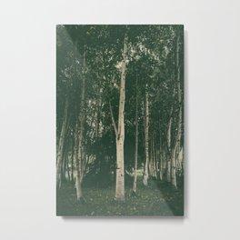 Tall Skinny Trees Metal Print