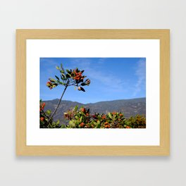 Ojai Valley Berries Framed Art Print