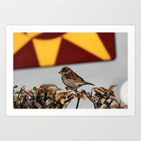 sparrow Art Prints featuring Sparrow by IowaShots