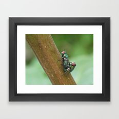 Flies Framed Art Print