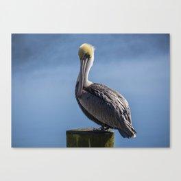 Pelican 02 Canvas Print