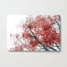 Star Berries Metal Print