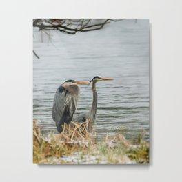 Blue Heron Pair Metal Print