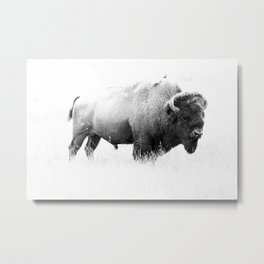 Bison - Monochrome Metal Print