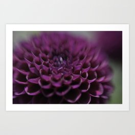Purple Dalia Flower - Dignity and Grace Art Print