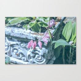 Soft Pink Bleeding Hearts Canvas Print
