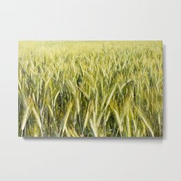 cereal plants grow plenty on field Metal Print
