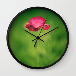 Poppy Flowers Papaver rhoeas in Spring Wall Clock
