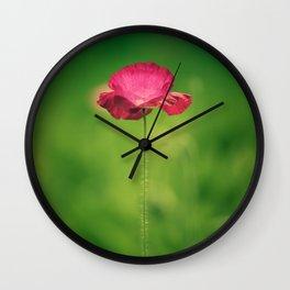 Poppy Flowers Papaver rhoeas in Spring Wall Clock