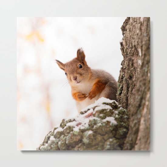 Squirrel in first snow Metal Print