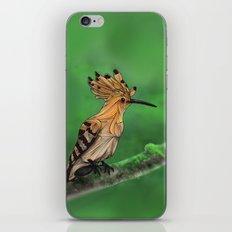 Upupa iPhone & iPod Skin