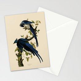 Columbia Jay Illustration by J.J. Audubon Stationery Cards