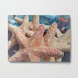 Starfish Lineup Metal Print