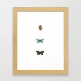 Antique Butterflies I Framed Art Print