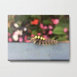 Caterpillar Metal Print