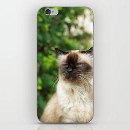 Kittycat2 iPhone Skin