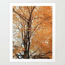 Autumn Leaves IV Art Print