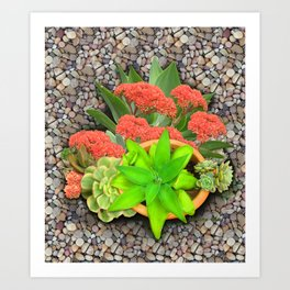 Flowering Crassula Perfoliata Art Print