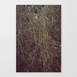 Tangled II Canvas Print