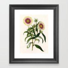 Botanical Study Framed Art Print