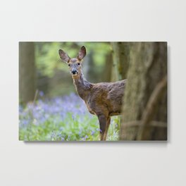 ROE DEER IN BLUEBELL WOOD Metal Print