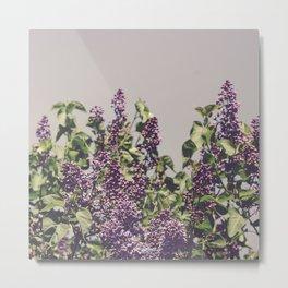 Wild Lilacs Metal Print