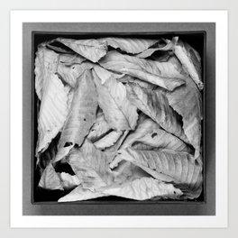 Boxed Organics - Leaves Art Print