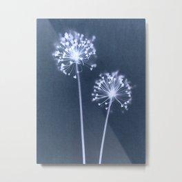 Indigo Dandelion Botanical Cyanotype Metal Print