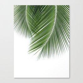 Delicate palms Canvas Print