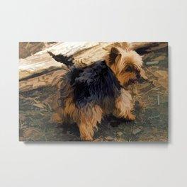 Cute Little Yorkie   - Yorkshire Terrier Dog Metal Print