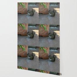 Crouching Squirrel Wallpaper