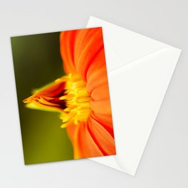 Mexican Sunflower Unfolding Stationery Cards
