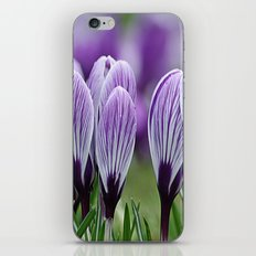 Purple Crocus iPhone & iPod Skin