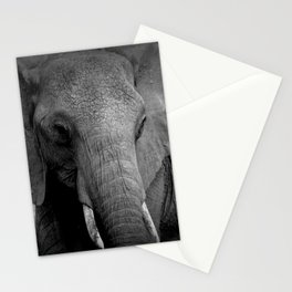African Elephant Black and White Stationery Cards