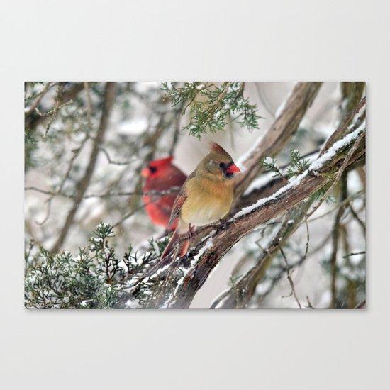 Tandem Cardinals Canvas Print